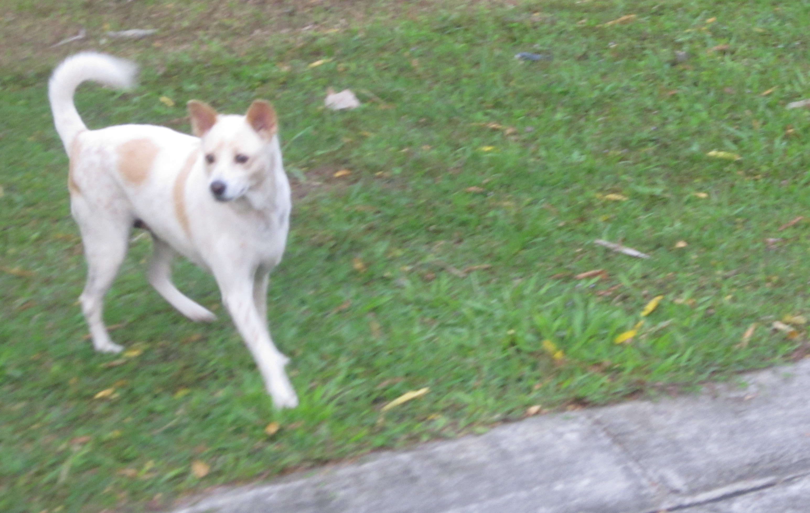 Blessy-the-dog-foto1